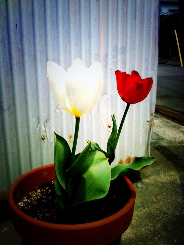 全曲ライブ企画「愛の花」
